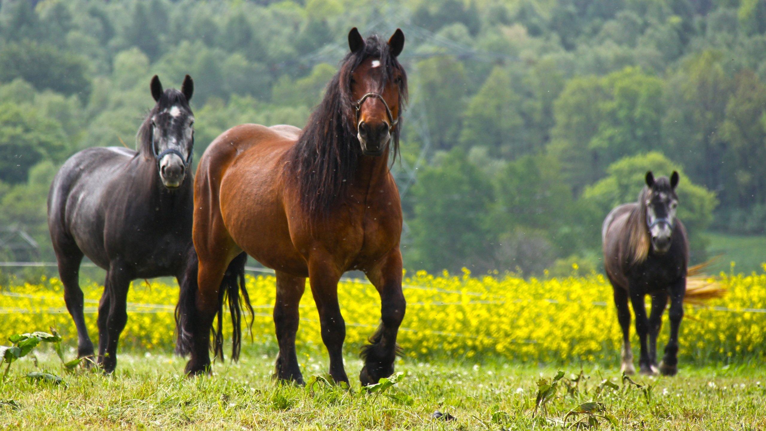 paseo a caballo en Zahara de la sierra